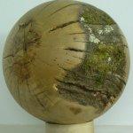 Schüppeleiche, Ramsen, Durchmesser 35 cm